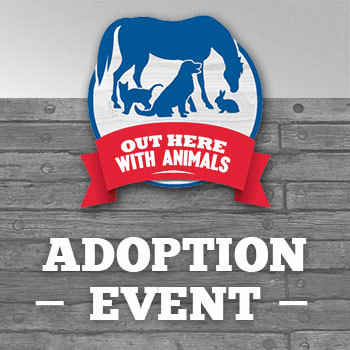 Out Here With Animals Adoption Event: 8/24/19