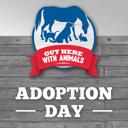 Out Here With Animals Adoption Day: 8/24/19